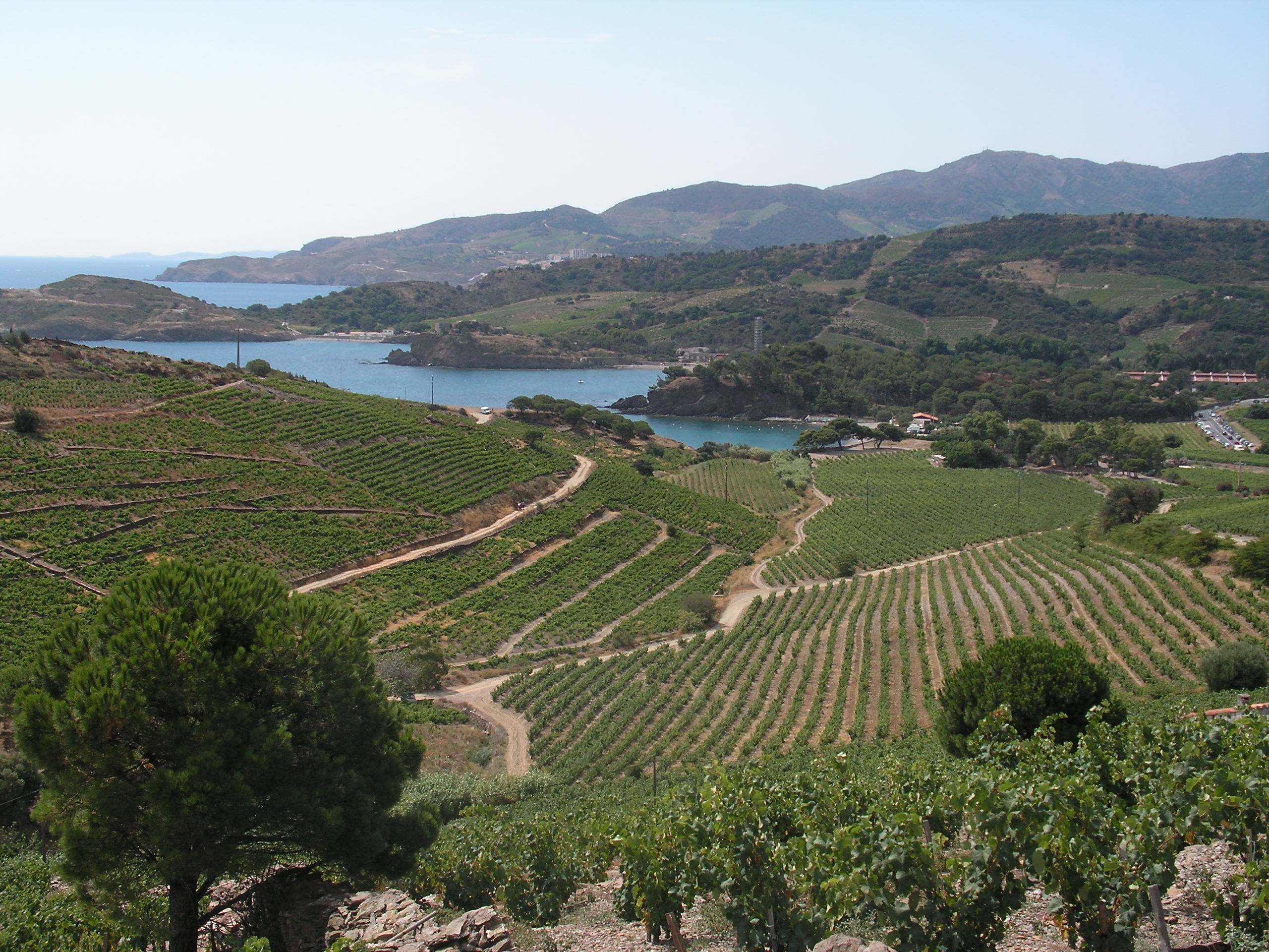Vignoble de Port-Vendres